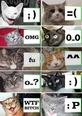 Lol Cat Faces Pictures, Images and Photos